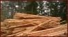 """Дървен материал, добит от Рило-Родопския масив от """"АВДЖИ ЛЕС"""" ЕООД. Ние сме с дългогодишен опит в дърводобива, производството и търговията на иглолистен дървен материал. Предлаганият от дървен материал отговаря на всички изисквания и сертификати. - Дървен материал"""