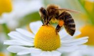 В този каталог ще откриете всички хранителни продукти за пчели от магазин Мултимакс. https://issuu.com/promof/docs/katalog_pdf - Пчеларство