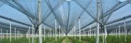 Мрежи против градушка от Скай Протект - Градинарство