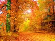Прекрасна есен - ПРИРОДА
