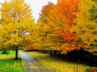 Есенна еферия - ПРИРОДА