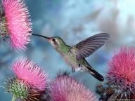 Невероятни птици - ПРИРОДА