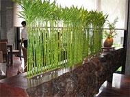 Красотата на стайните растения е безспорна. Има много впечатляващи вътрешни градини в обществените сгради, малките саксийки по первазите на прозорците…  http://goo.gl/8sZq3D - Декоративни Растения