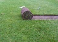 Затревяване с тревен чим  Тревният чим представлява трева отгледана предварително в продължение на година, предназначена за незабавно и трайно създаване на всички типове тревни  площи.  - Градинарство