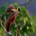 Невероятни птици